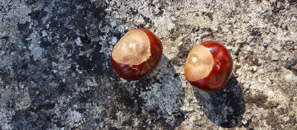 Zwei schalenlose Kastanien